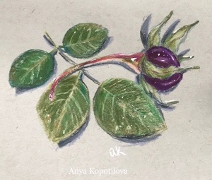 dried rose colored pencil sketch greenrainart