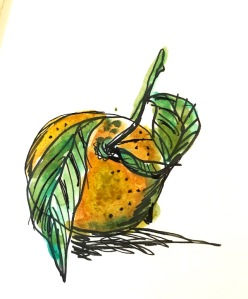 orange 3 minute sketch greenrainart