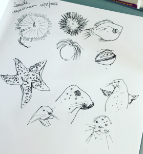 seaside aquarium sketches greenrainart