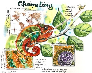 chameleon sketch greenrainart